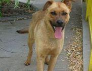 Kutyaszív Állatmentő Közhasznú Alapítvány - Állatmentés, állatvédelem, szemléletformálás