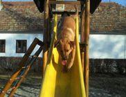 Frakk Állatvédő Egyesület - Állatvédelem, állatmentés