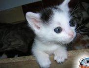Junior Kisállat Rezervátum Alapítvány - Állatmentés, állatvédelem