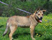 Ebremény Kutyavédő Egyesület - Állatmentés, állatvédelem