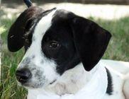 Derecskei Állatbarátok Közhasznú Egyesülete - Állatvédelem, állatmentés