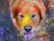 Pets Care Állatmentő és Környezetvédő Segélyegyesület - Állatmentés, környezetvédelem