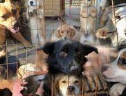 Ugat-lak Közhasznú Alapítvány - Állatvédelem, állatmentés