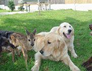 TordasZoo Állatmentő Farm Kiemelten Közhasznú Alapítvány - Állatvédelem, állatmentés