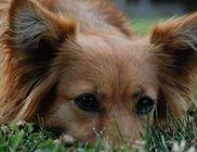Kutyabaj Alapítvány - Állatmentés, állatvédelem