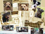 KUTYAHÁZ Egyesület - Állatvédelem, állatmentés