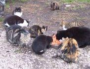 Kisállatmenhely Alapítvány - Állatmentés, állatvédelem