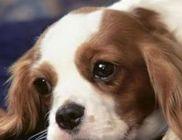 Ments meg! Oroszlányi Állatvédő Egyesület - Állatvédelem, állatmentés