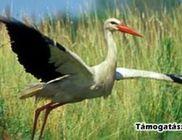 CSEMETE Természet és Környezetvédelmi Egyesület - Természetvédelem