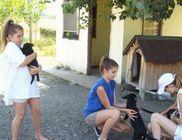 Összefogás Az Állatokért Közhasznú Alapítvány - Állatvédelem, állatmentés
