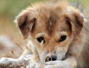 Zöld Sziget Állatmenhely - Állatvédelem, állatmentés