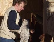 Vidám Mancsok Állatvédő Egyesület - Állatmentés, állatvédelem