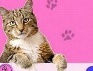 Cirmos Cica Közhasznú Alapítvány - Kóbor vagy gazdátlan cicák mentése