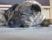 Kutya-segélyszolgálat Közhasznú Alapítvány - Állatvédelem, állatmentés