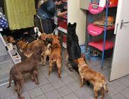 Orosházi Állatmentő Közhasznú Alapítvány - Állatvédelem, állatmentés