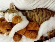 Macskamánia Magyar Macska Egyesület - Állatvédelem, macskatartás kultúrájának népszerűsítése
