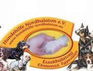 Északbalatoni Ebmentő Egyesület - Sérült állatok megmentése, segítése