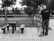 Tetovált Állatmentők Állatvédelmi Egyesület - Állatmentés, állatvédelem