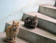 Jóbarát Állat- és Természetvédelmi Közhasznú Alapítvány - Állatvédelem