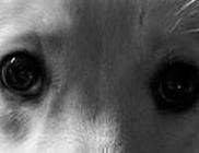 Rózsa Katalin Kutyavédő Alapítvány - Állatvédelem