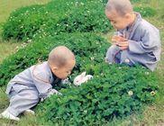 Buddhista Misszió Magyarországi Árya Maitreya Mandala Egyházközösség