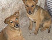 Nagyszénási Állatvédő Közhasznú Egyesület - Állatmentés, állatvédelem