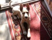 Szarvas Kóbor és Elveszett Kutyáiért Állatvédő Egyesület - Állatvédelem, állatmentés