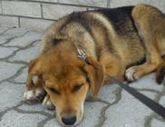Minimentő Állatvédők Egyesülete - Állatvédelem, állatmentés