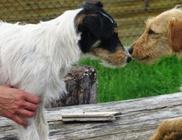 Bóbita Állatsegély Alapítvány - Állatvédelem, állatmentés