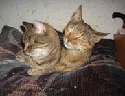Állatmenhely Közhasznú Egyesület - Állatvédelem, állatmentés