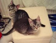 Belfegor és Maci Állatmenhely Alapítvány - Állatmentés, állatvédelem